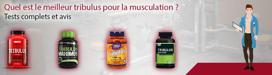 meilleur tribulus musculation
