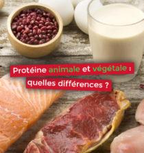 Protéine animale et végétale quelles différences