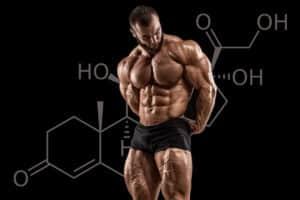 cortisol et musculation