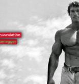 Le programme de musculation d'Arnold Schwarzenegger